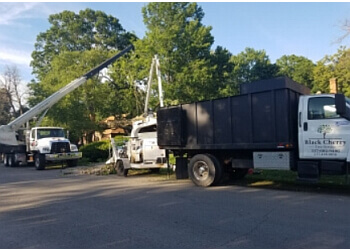 Indianapolis tree service Black Cherry Tree Service