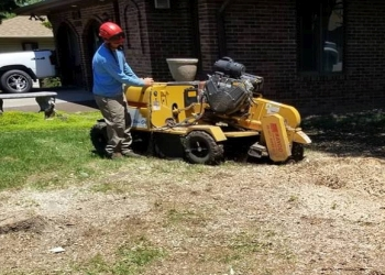3 Best Tree Services in Lincoln, NE - Expert Recommendations