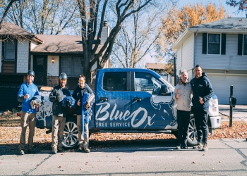 Lincoln tree service Blue Ox Tree Service
