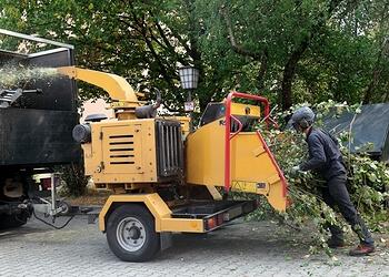 Norman tree service Bongala Tree Service