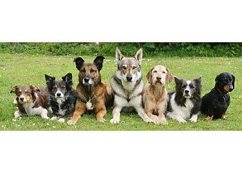 Raleigh dog training Born to Lead Dog Training