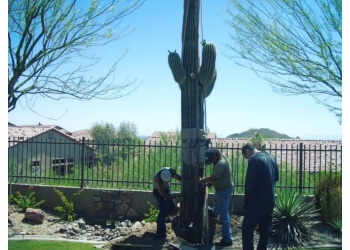 Scottsdale tree service  Branch Management Tree Service, LLC