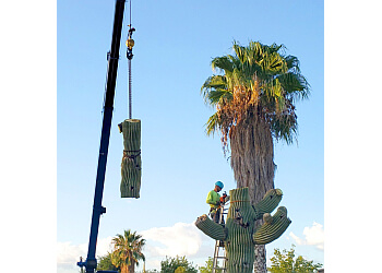 Tucson tree service Branching Out Tree Service
