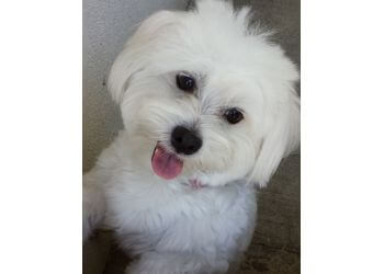 Garden Grove veterinary clinic Brookhaven Pet Hospital