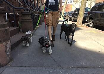 New York dog walker Brownstone Dog Walkers