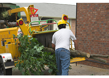Brownsville tree service Brownsville Tree Services Pros