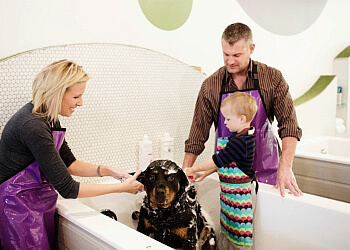 St Paul pet grooming Bubbly Paws Dog Wash