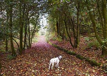 Gresham hiking trail Butler Creek Park Trail