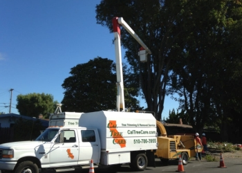 Hayward tree service Cal Tree Care
