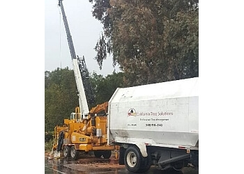 San Jose tree service California Tree Solutions