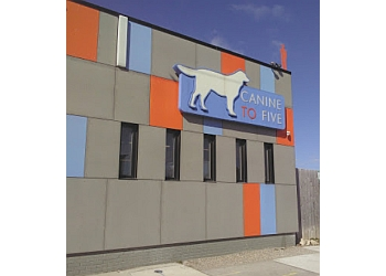 Detroit pet grooming Canine To Five