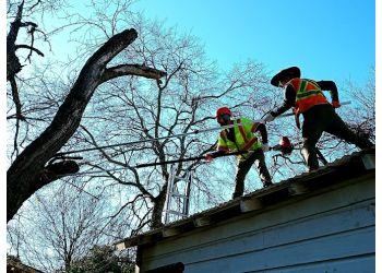 San Antonio tree service Canopy Tree Service