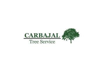 Waco tree service Carbajal Tree Service