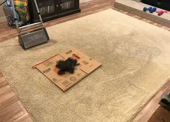 Arlington carpet cleaner Carpet Pro Carpet Care