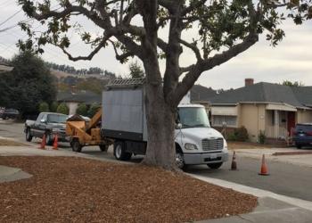 Hayward tree service Castillo Tree Service