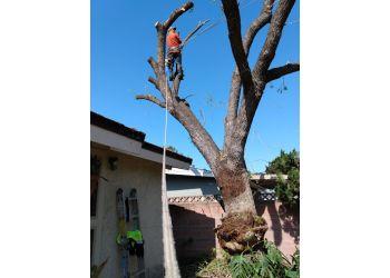 San Diego tree service Charles Tree Service Inc.