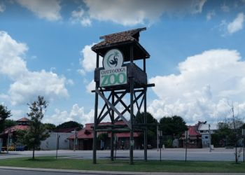 Chattanooga places to see Chattanooga Zoo