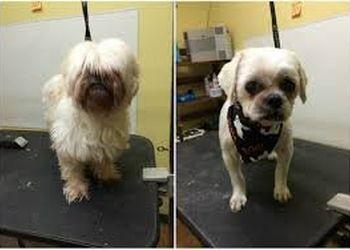 Detroit pet grooming Chets Dog Grooming & Boarding