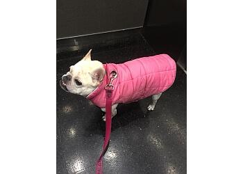 Boston dog walker Cloud9 K9
