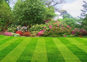 Aurora lawn care service Colorado Home Maintenance LLC.