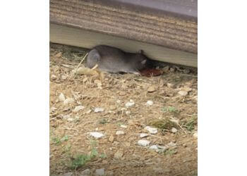 Knoxville animal removal Critter Wranglers, LLC.