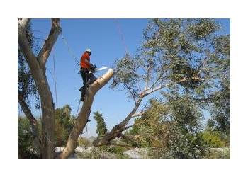 McAllen tree service Crows Nest Palm Tree Services