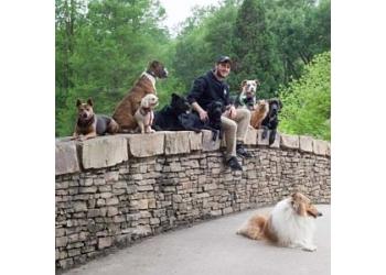 Washington dog training DC Dog Wizard