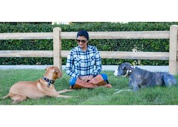 San Jose dog training D For Dog Inc
