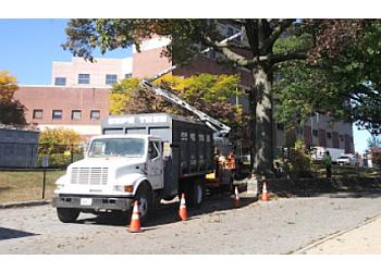 Providence tree service D. Sepe Tree Service