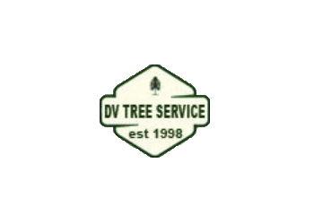 West Palm Beach tree service DV Tree Service