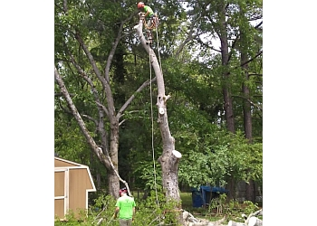 Murfreesboro tree service Dailey Tree Care