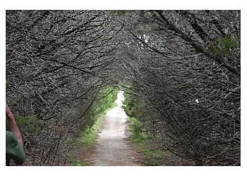 Killeen hiking trail Dana Peak Park