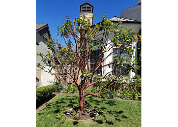 Huntington Beach tree service Dan's Tree Service