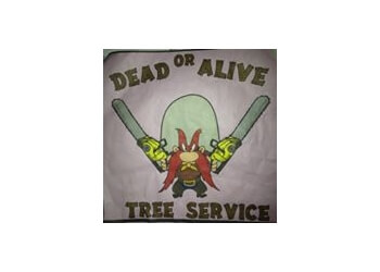 Norman tree service Dead or Alive Tree Services