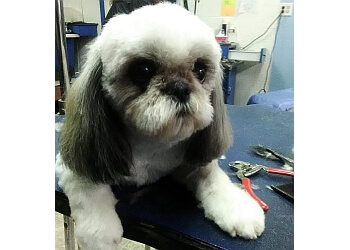 Car Dealerships Springfield Ma >> 3 Best Pet Grooming in Springfield, MA - ThreeBestRated
