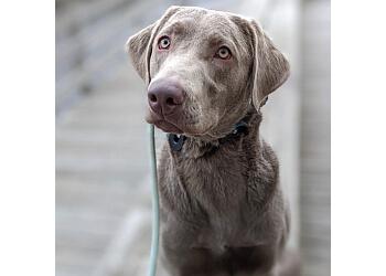 Baltimore dog training Denise Willis Dog Training