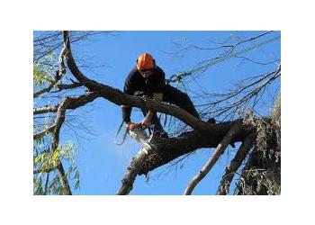 Detroit tree service Detroit Tree Service