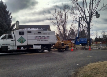 Fort Collins tree service Diamond Tree Company