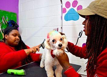 Providence pet grooming Diva Dogg Grooming