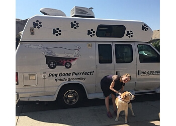 Elk Grove pet grooming Dog Gone Purrfect