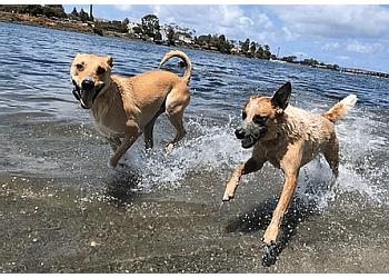San Diego dog walker Dog Tired San Diego