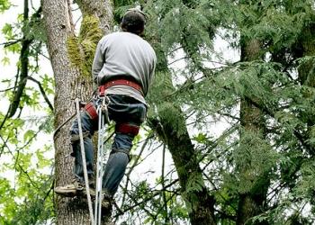 Moreno Valley tree service Donovan's Lawn & Tree Service