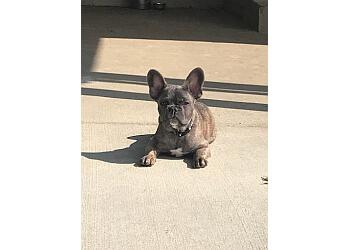 Louisville dog training Double H Canine Training Academy