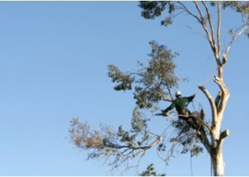 Plano tree service Eagle Tree Experts