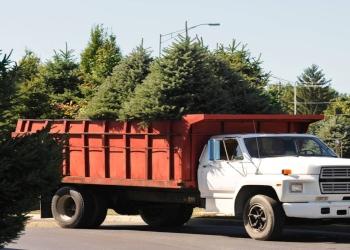 Oakland tree service Eagle Tree Service