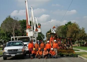 Long Beach tree service Economy Tree Care