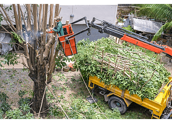 Elk Grove tree service Elk Grove Tree Pros