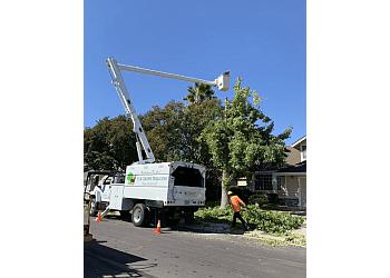 Elk Grove tree service Elk Grove Tree Services