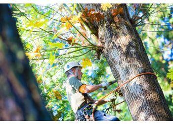 Seattle tree service Emerald Tree Service
