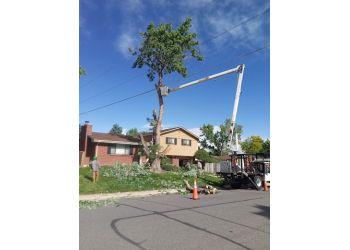 Denver tree service Environmental Tree Care LLC